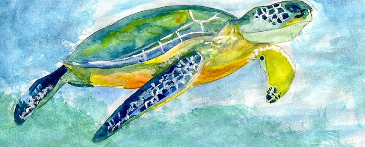 Turtle Tales – Celebrating turtles with stories from across the world